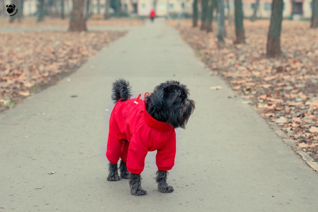 ismerkedés az új kutya)